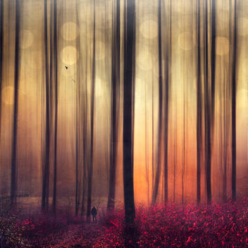 Autum forest, man and flying birds, digitally manipulated
