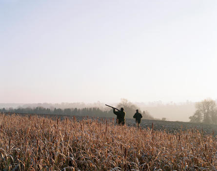 Men Hunting Pheasants, Finchdean, Hampshire, England, United Kingdom.