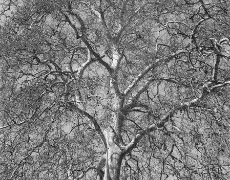 Tree With Spread Out Branches