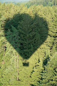 Germany, Shadow of hot air balloon over conifer forest