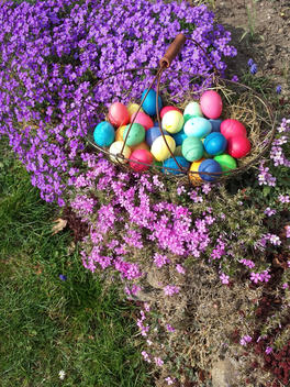 Easter, Easter eggs, Easter, Easter Bunny, Holiday, Tradition, Saxony, Germany, Aubrieta