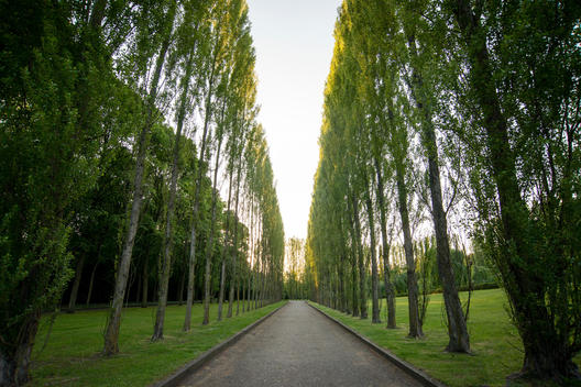 Tree lined road at Soviet War Memorial at Treptow Park Berlin.