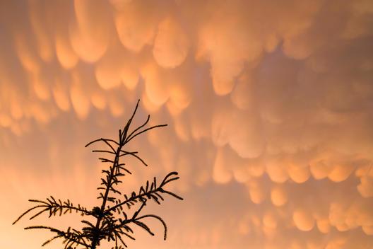 Mammatus In Summer Storm