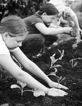 Children Planting In A Garden.