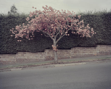 Tree Blossoming In Front Of Building
