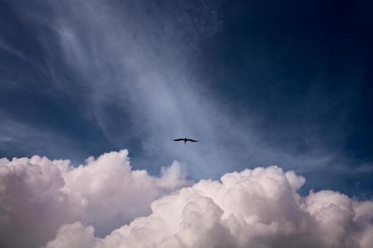Bird Soaring In Air