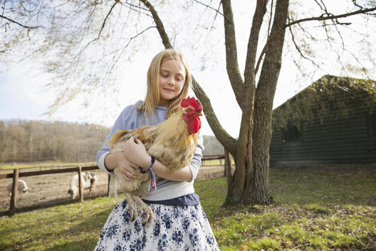 A girl holding a large chicken in an animal enclosure at an animal sanctuary.