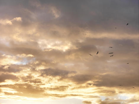 Dramatic Cloudy Sunset Sky With Flying Birds