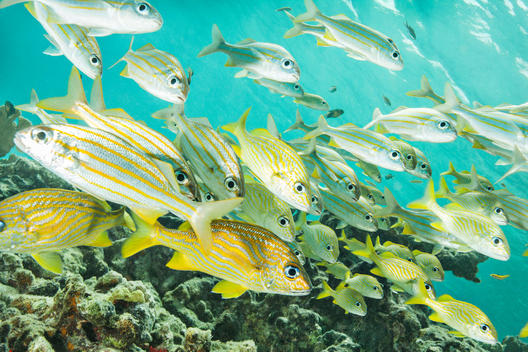 School of fish at underwater reef