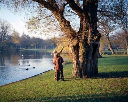Senior Couple Admiring Large Old Tree