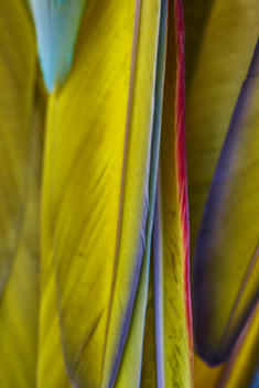 tropical bird feathers