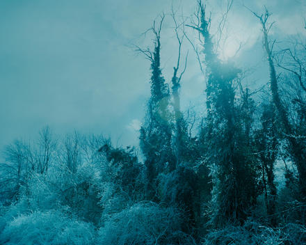 Ice Covered Trees In Fantastical Winter Landscape