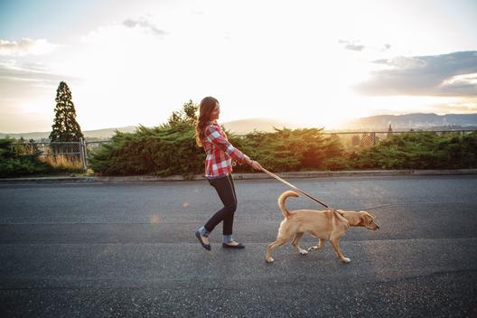 Woman walking her dog at sunset