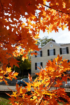 Bright orange leaves and colonial house in the background, Staunton, Virginia