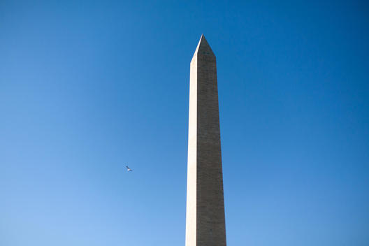 washington monument and bird