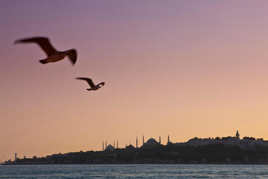 Turkey, Seagulls flying in sky, Blue Mosque in background