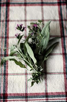 A Bouquet Of Fresh Herbs.