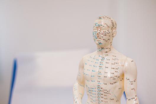 Acupuncture model in surgery