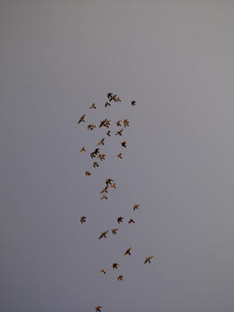 birds in the sky over Amman