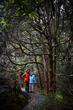Senior Couple Hiking In Enchanted Forest
