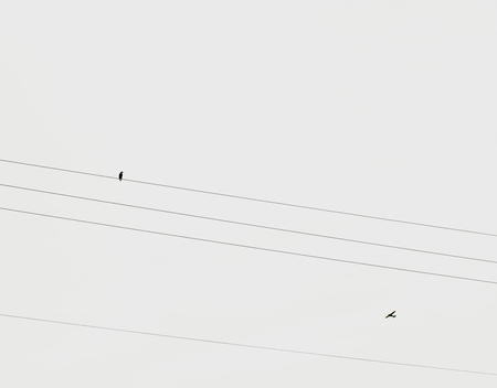 Bird On Cable