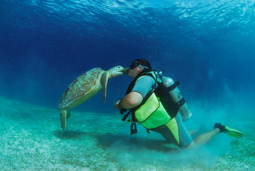 Philippines, scuba diver with green turle, underwater view