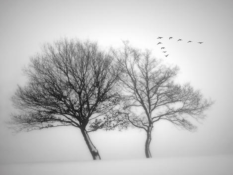Birds Flying Above Bare Trees And Snow, Numbrecht, North Rhine-Westphalia, Germany.