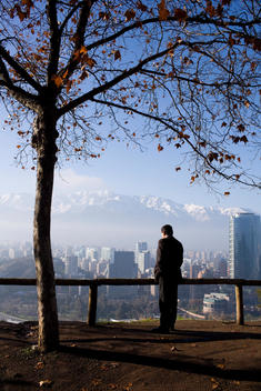 Man Standing Under Tree Looking At Santiago Skyline From Cerro San Cristobal