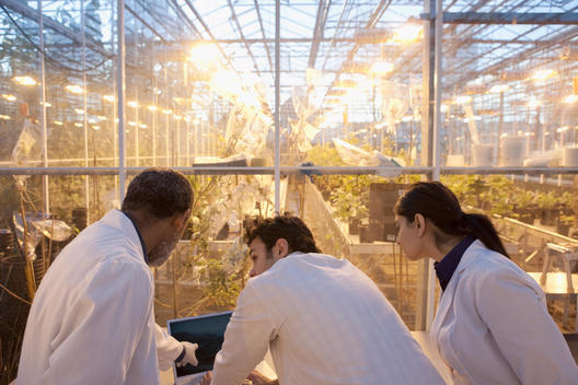 Scientists working in greenhouse laboratory