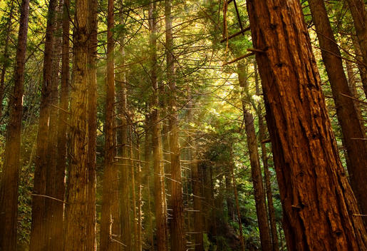 Rays Of Early Morning Sun Pop Through The Trees At Limekiln State Park