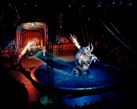 Elephant Performing Tricks At Ringling Brothers Barnum And Bailey Circus