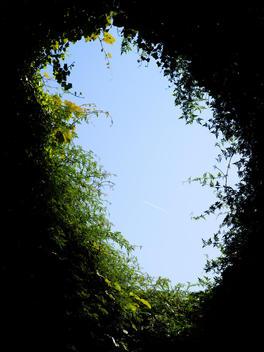 Gap Through A Green Leafy Hedge Reveals A Blue Sky, London, England, Uk.