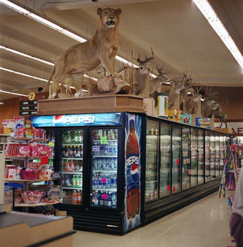 Taxidermy animals on display in a hunting supplies store, Twisp, Washington, USA.