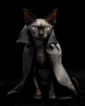 Sphinx Cat In Costume