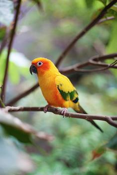 Tropical birds, jungle