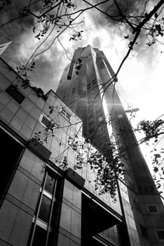Tree Branches And Tall Building