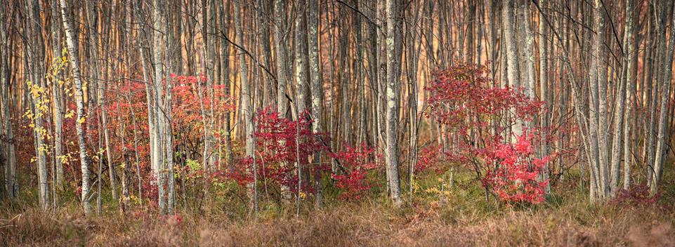 Autumn, Bashakill Wildlife Management Area, Wurtsboro, NY