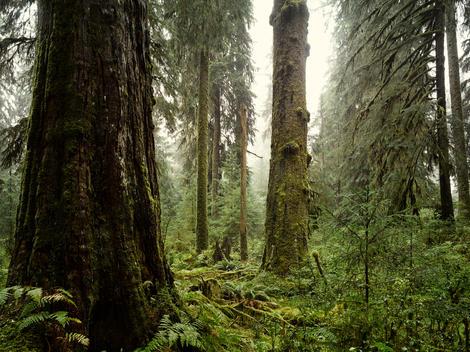 Rain forest scene shot in the rain and fog.