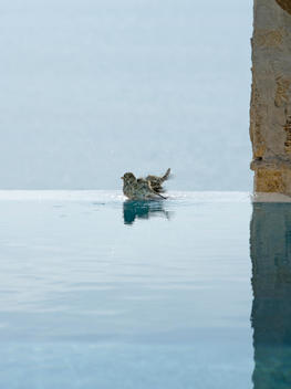 Bird On Edge Of Spa Eternity Pool