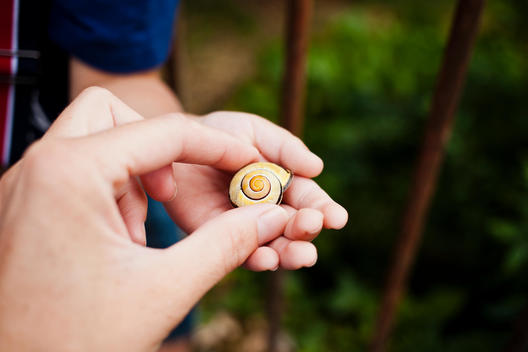 big and small hands holding a snail shell