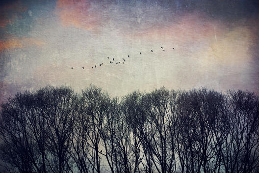 Bare treetops and a flock of flying birds