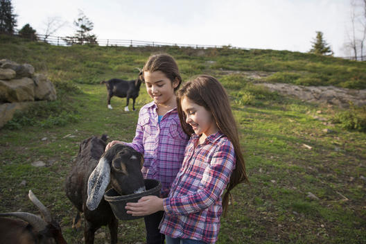 Two children, young girls, in the goat enclosure at an animal sanctuary.
