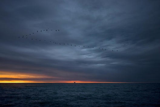 Twilight Over Sea With Formation Of Flying Birds