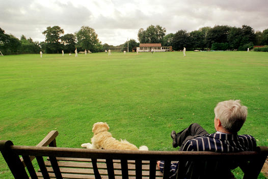 Senior Man And Dog Relax On Park Bench And Watch Cricket Match