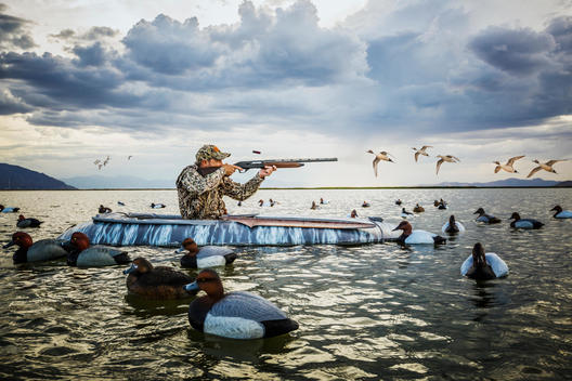Duck hunter in layout boat shooting his shotgun at ducks flying over his decoys