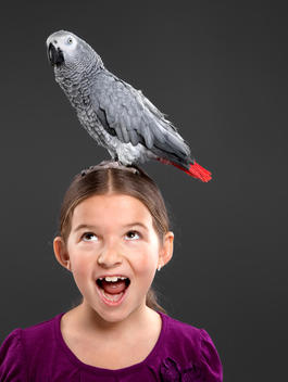 Pet parrot standing on top head of young girl, girl surprised expression