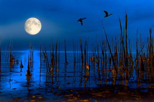 birds night flight