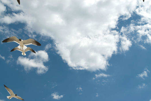 Seagull flying high against blue sky and white clouds