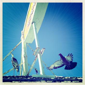 Birds next to a sign