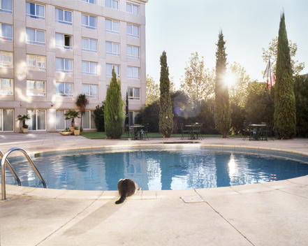 A Cat Drinking From A Swimming Pool In Montpellier